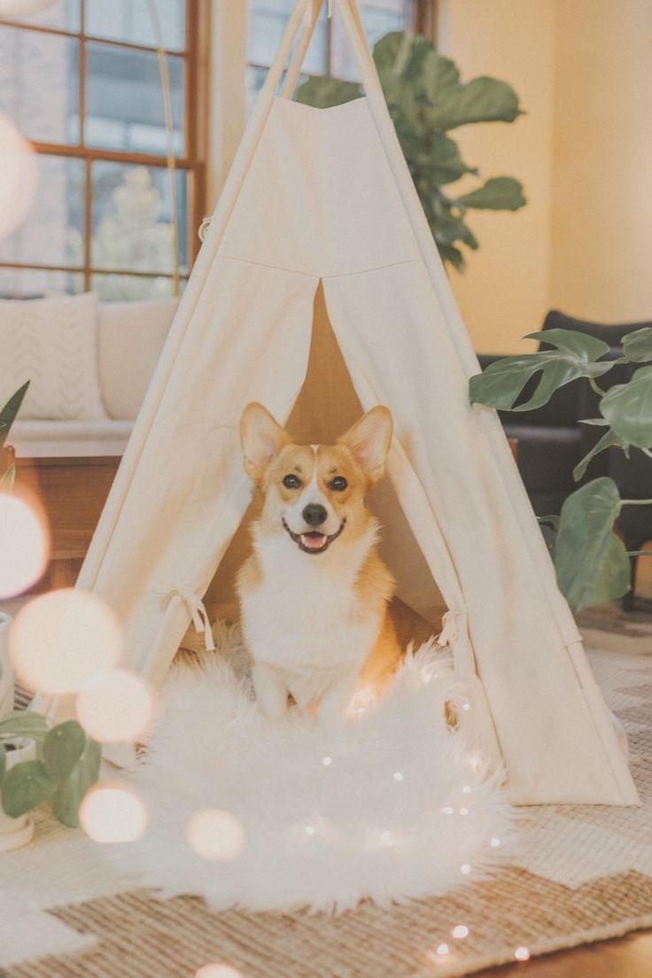 Consejos para el espacio de tu mascota Online Dog Training, Basic Dog Training, Crate Training, Training Tips, Cute Dogs And Puppies, Pet Dogs, Pets, Doggies, Pet Kennels