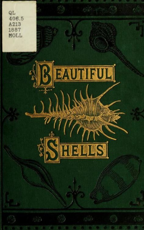 nemfrog:  Book cover _Beautiful shells_ 1887