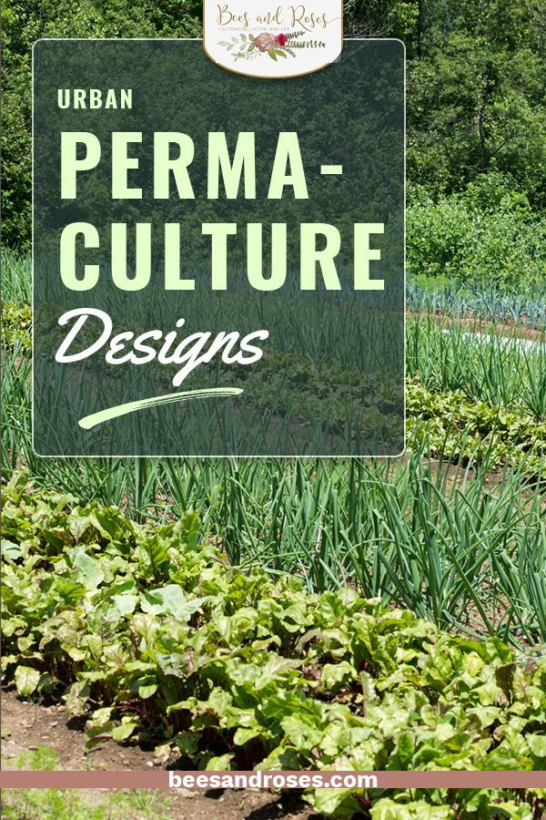 Easy Urban Permaculture Designs For Your Backyard ... on Backyard Permaculture Design id=43042