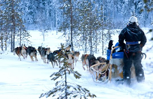 Santa Claus Holiday Village excursions avec les huskies