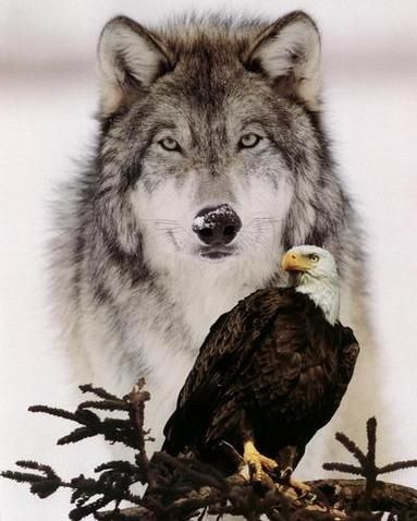 Gives me Chills seing such beautiful animals, but also makes my haert beat a little faster and put a smile on my face!