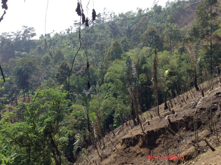 Save ur forest please