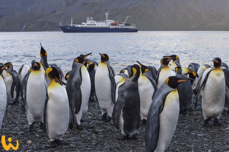 Die Pinguine von Madagaskar?? Fast. Diese mysteriösen und unterhaltsamen Vögel könnt ihr mit uns in der Antartis besuchen!! ♥ #königspinguine #tauchreisen #wirodive #kalt #erlebnisreise #kommzumirmitwirodive #traumhaft #unberührt #cute #kuschelig  #antarkis #sonne #blauerhimmel #schnee #meer #mehr #lebedeinleben