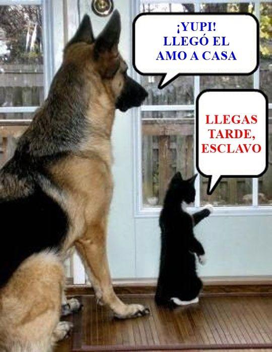 Por eso amo a mi perro        Gracias a http://www.cuantocabron.com/   Si quieres leer la noticia completa visita: http://www.estoy-aburrido.com/por-eso-amo-a-mi-perro/