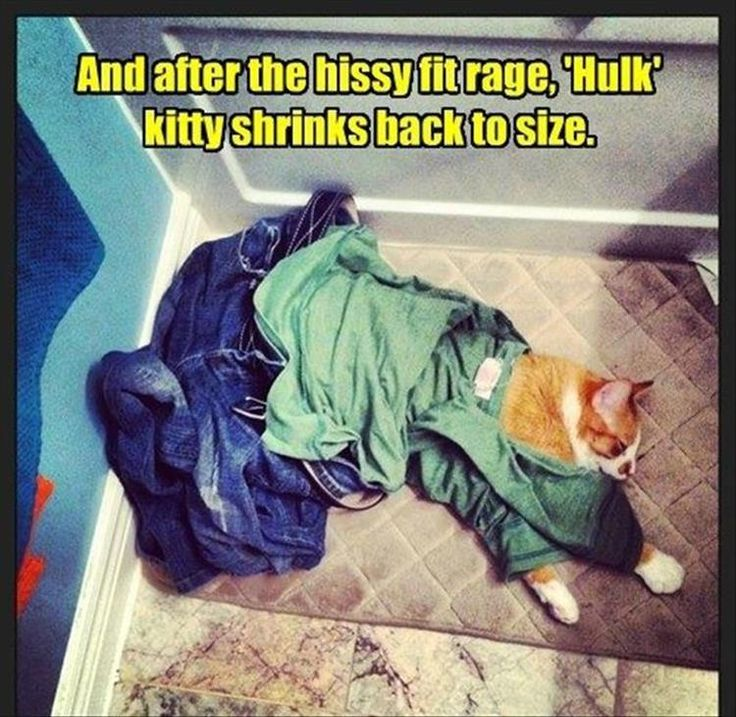 Funny Animals Of The Day 20 photos Morably