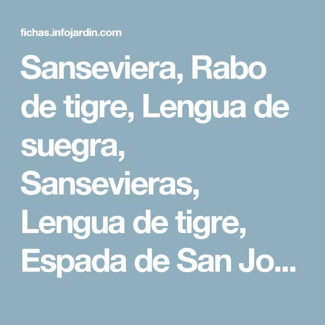 Sanseviera, Rabo de tigre, Lengua de suegra, Sansevieras, Lengua de tigre, Espada de San Jorge - Sanseviera trifasciata