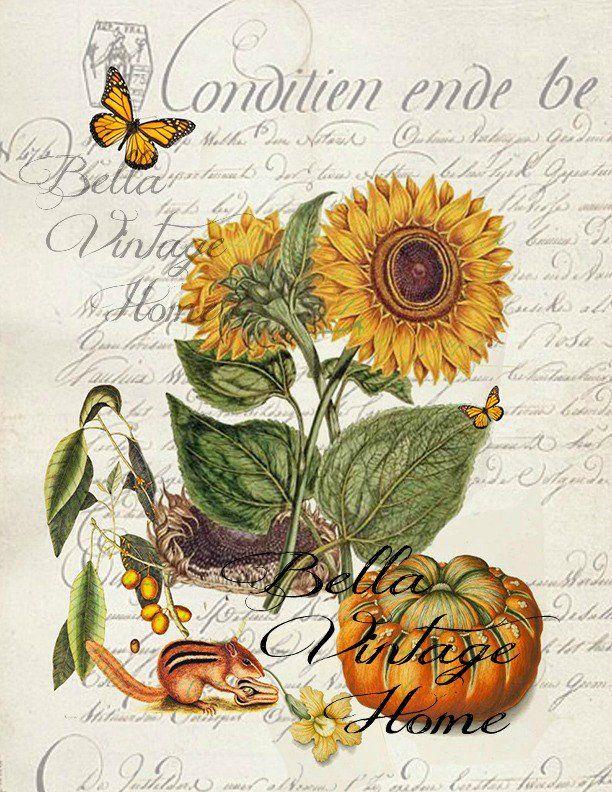 326 Best Images About Sun Flowers On Pinterest