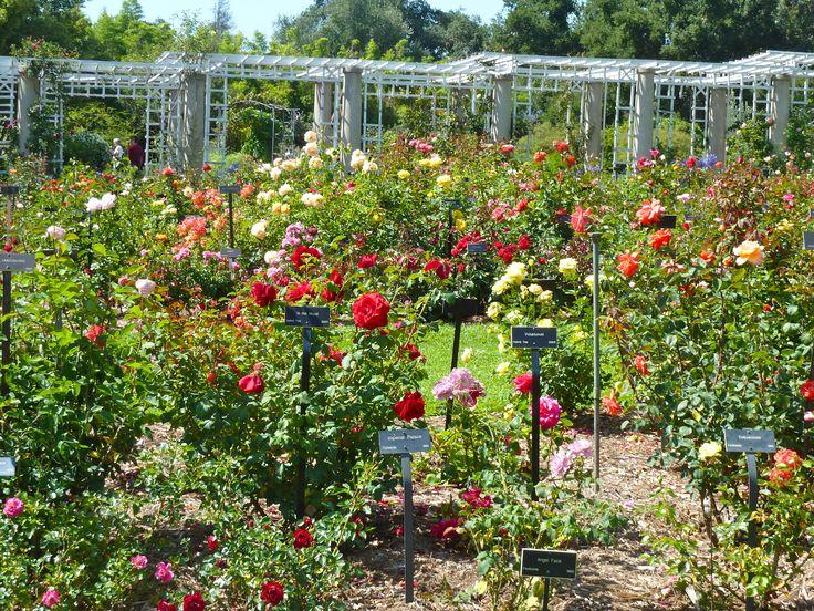 49 best Huntington herb garden images on Pinterest | Herb garden ...