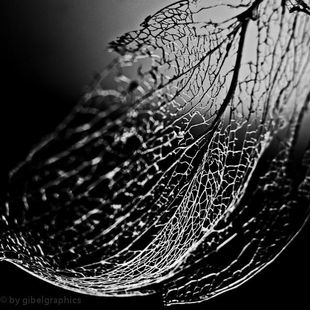 what remains of a leaf...
