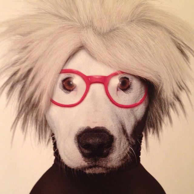 Andy Warhol-dogski