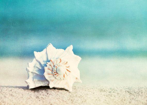 Beach Photography Set - Four 5x7 Photographs - seashell sea shell photo print - seashore shore decor turquoise - aqua teal blue wall art. $45.00, via Etsy.