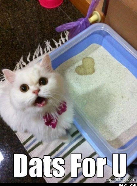 Ur in my heart, but urine needs to stay inside the box! -Sarah donnor the crazy cat lady
