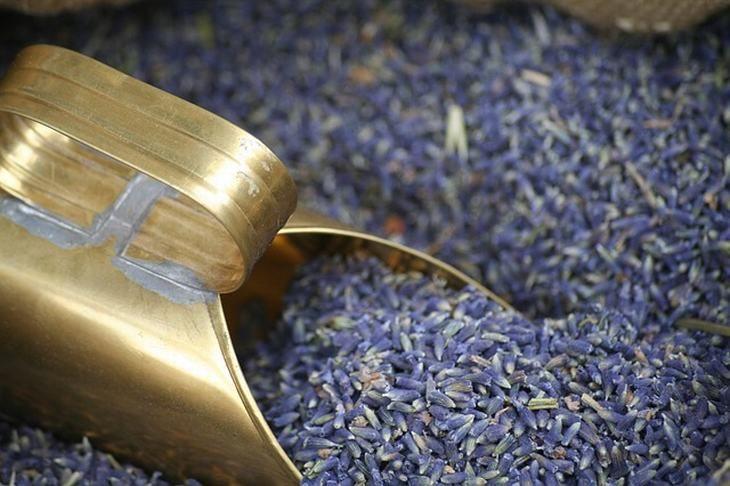 12 Usos do Óleo Essencial de Lavanda | Saúde - TudoPorEmail