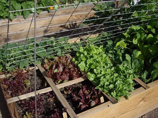 1000 images about projects to try on pinterest gardens raised beds and diy planter box - Square meter vegetable garden ...