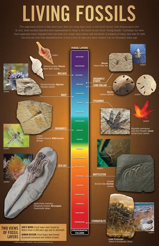 Living Fossils Wall Chart | Answers in Genesis
