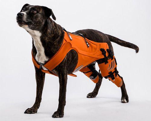 Best Dog Harness For Hip Dysplasia