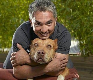Cesar Millan (the dog-whisperer) over honden.  Ik kijk geregeld, en labradir Cooper ook!