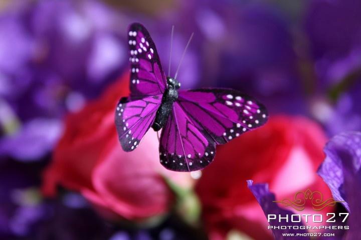 orchidee viola e farfalle _ www.photo27.com