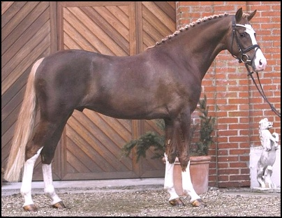 Liver Chestnut Horse With Flaxen Mane And Tail - photo#19