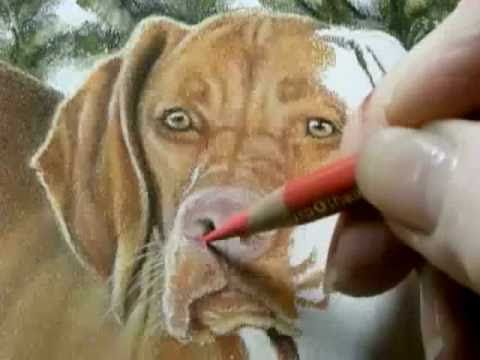 "Drawing a Vizsla in colored pencil Demonstration - Vizsla Dog by Roberta ""Roby"" Baer PSA"