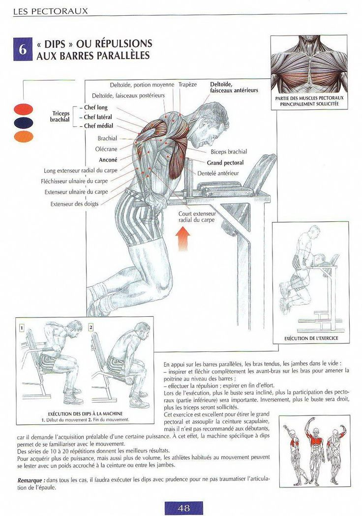 1000 images about on pinterest physical therapy for Guide musculation