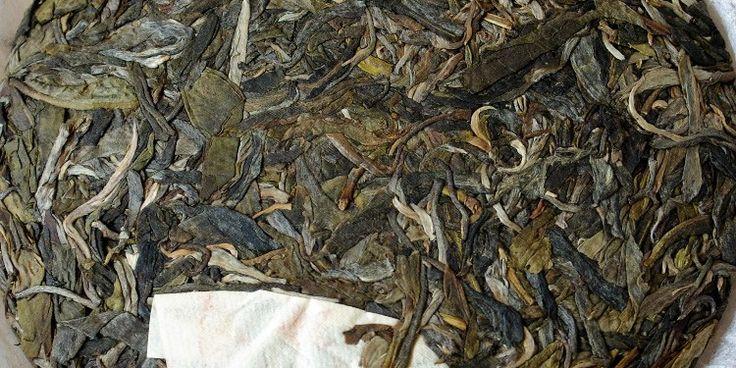 Lao Banzhang in the Dark Tea Depot