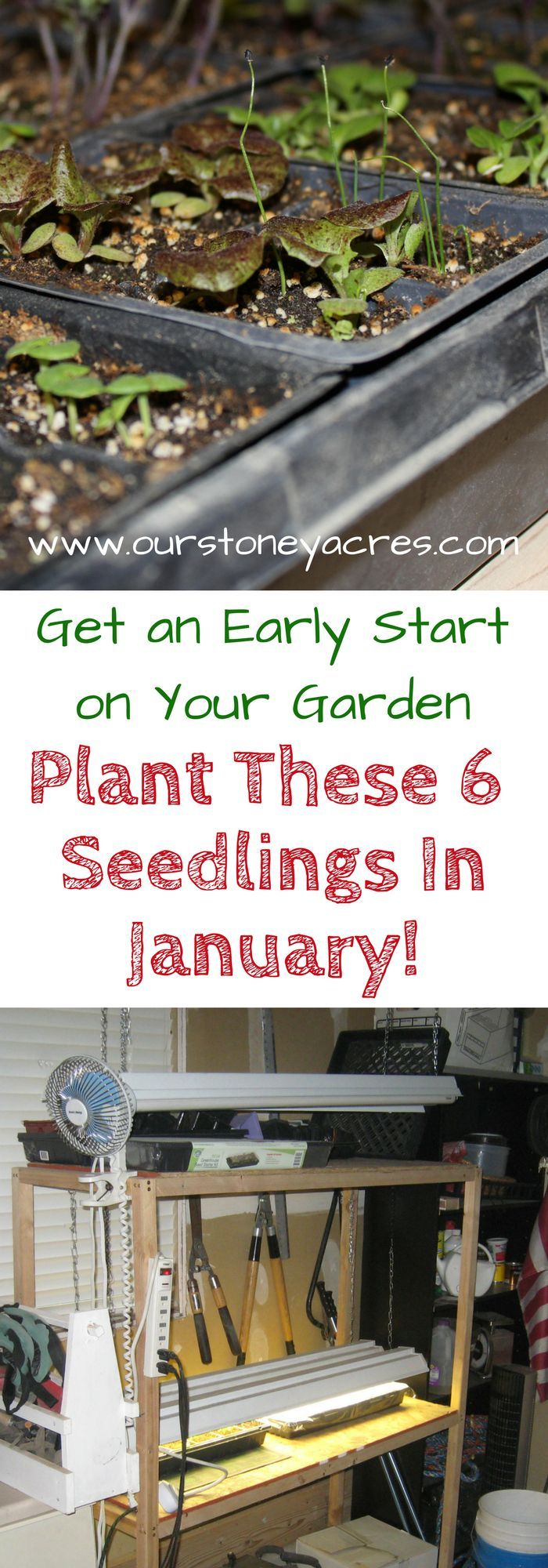best gardening images on pinterest herb garden succulents and