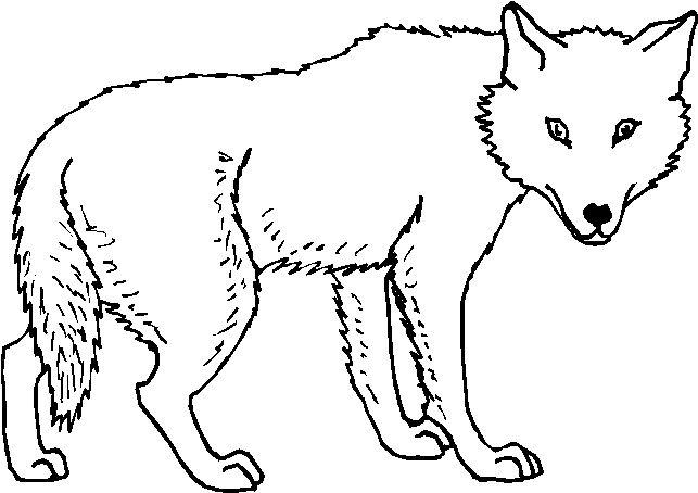Disegni Da Colorare Per Bambini Animali Della Foresta Nel 2020 Disegni Da Colorare Disegni Da Colorare Per Bambini Animali