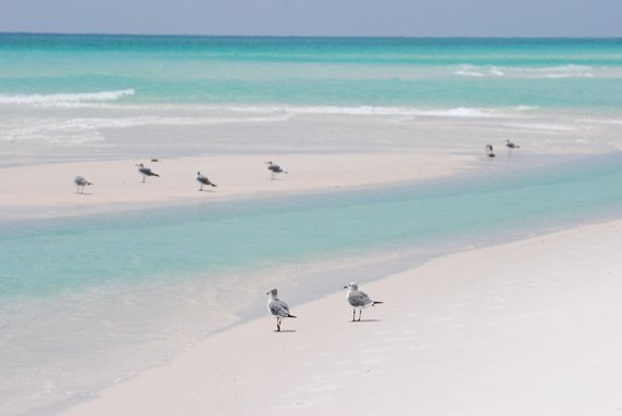 Navarre Beach, FL - Yes the water really looks like this...