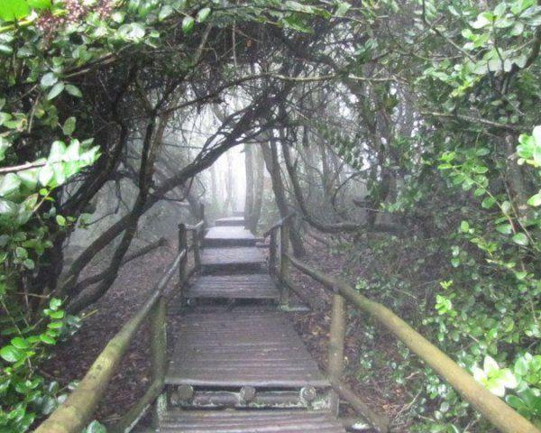 UNESCO - cloudforest - Parque Nacional Bosque de Fray Jorge, Ovalle (desde La Serena or Santiago), Chile