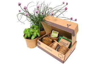 Herb Garden Starter Pack - seed kit with pots, labels, compost and other bits and bobs - grow Sweet Genovese Basil, French Flat Leaf Parsley, Dill, Coriander Leisure, Garlic Chives, Chives at home with no fuss! £33.98