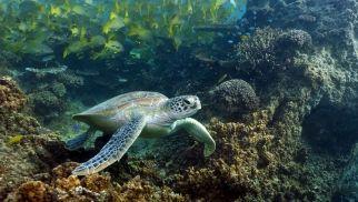 Diving at New Caladonia