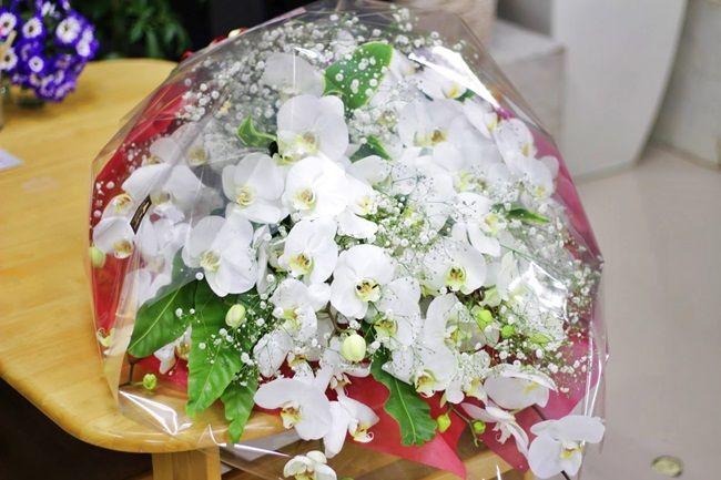 胡蝶蘭とかすみ草の花束 コンサートの御祝いに