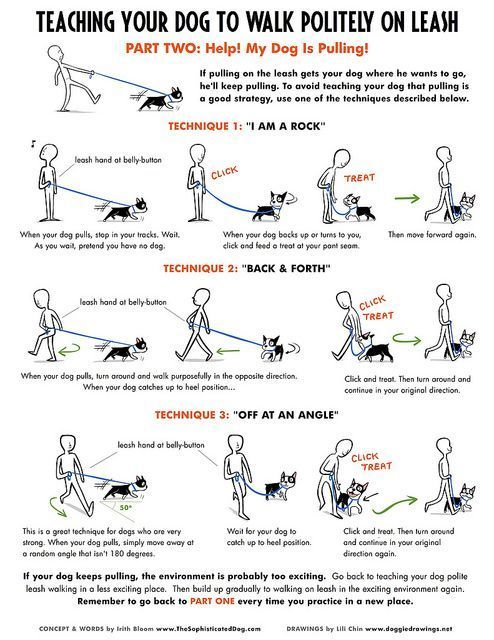 50 best Dog Walking Business images on Pinterest Animals, Dog - sample tolling agreement
