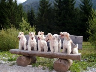 Nice of the humans to supply this terrier bench .