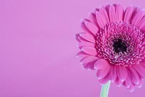 Cómo secar flores con gel de sílice