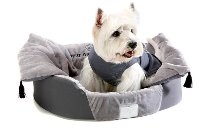 1000 images about westies on pinterest white terrier west highland terrier and westie puppies - Imperial westies ...