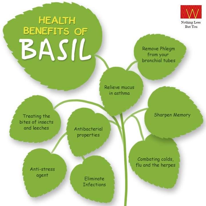 Are you including Basil in your diet?