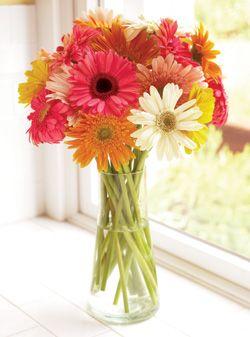 gerber daisies: Summer Flowers, Gerber Daisies, Gerbera Daisies, Colors Schemes, Fresh Flowers, Bouquets Of Flowers, Cut Flowers, Bright Colors, Make Me Smile