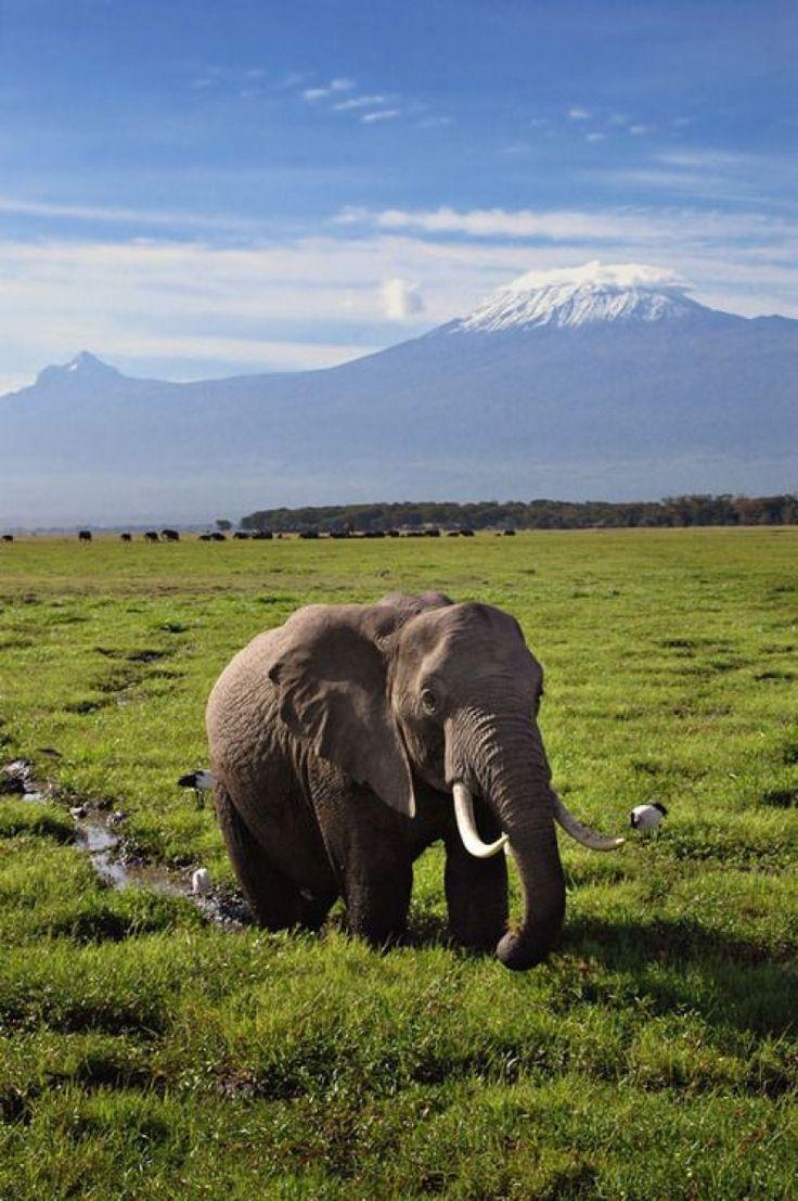 Serengeti National Park, Tanzania  ---  For more UNESCO World Heritage Sites http://www.ecstasycoffee.com/look-beautiful-unesco-world-heritage-sites/