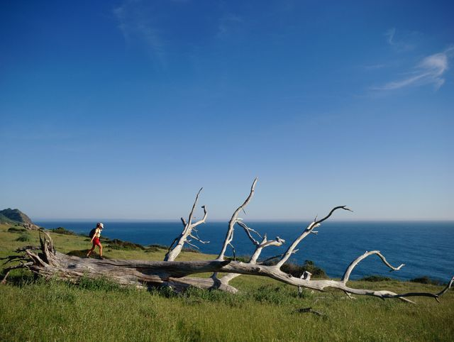 Your Guide to BLM Camping: King Range National Conservation Area in California