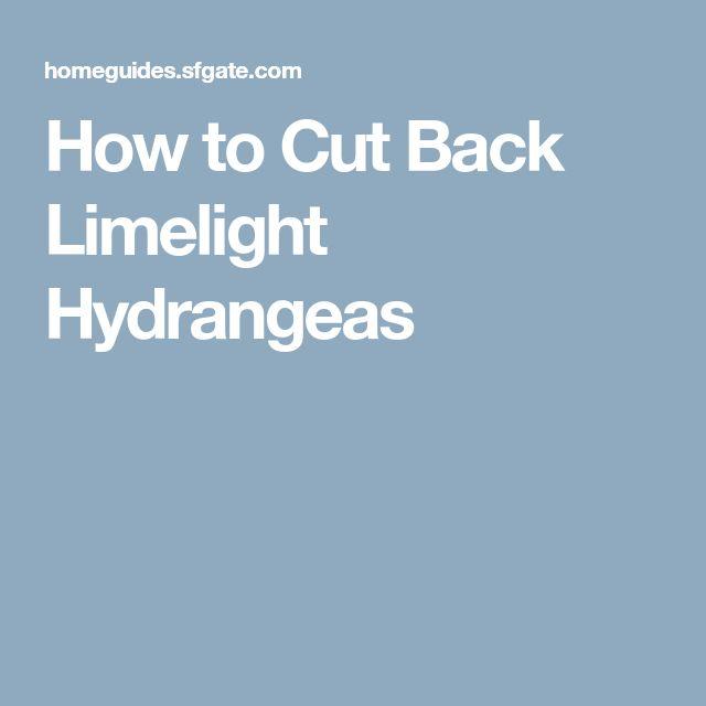 How to Cut Back Limelight Hydrangeas