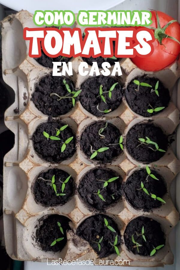 Como germinar tomates Eco Garden, Home Vegetable Garden, Fruit Plants, Growing Seeds, Planting Seeds, Growing Vegetables, Beautiful Gardens, Container Gardening, Succulents