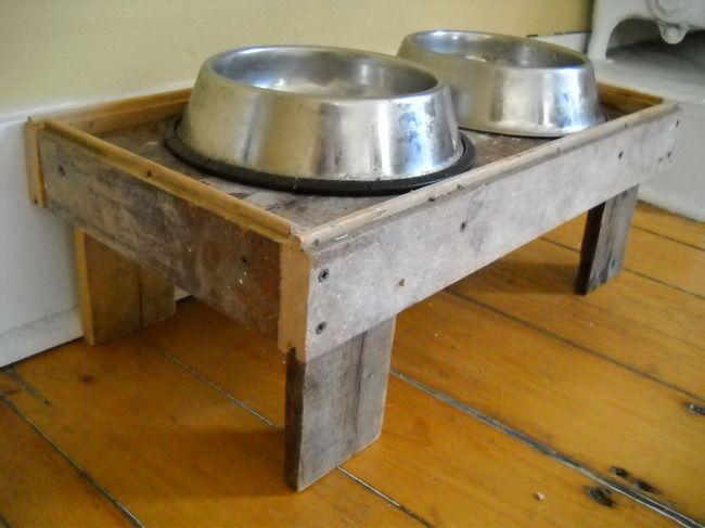 Raised dog dish- birthday present for Barley?