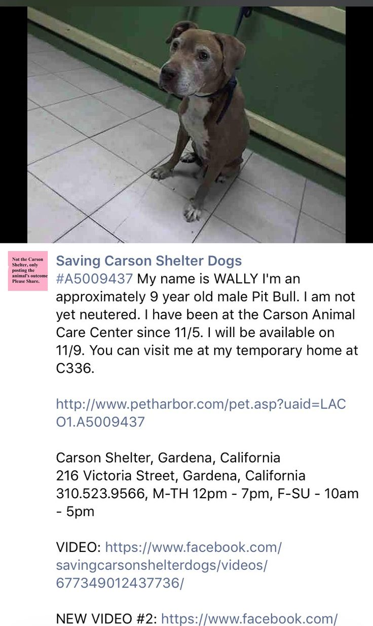 12/1/26 PLEASE SHARE POOR WALLY - RETURNED BY ADOPTER AFTER JUST ONE HOUR!!! /ij https://m.facebook.com/savingcarsonshelterdogs/photos/a.172032662969376.1073741830.171850219654287/676920855813885/?type=3&theater