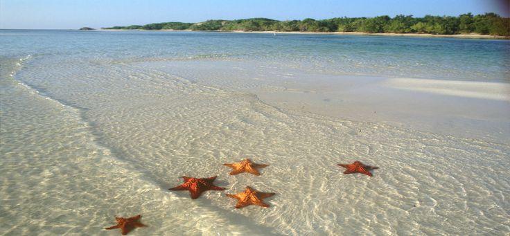 Cuban Starfish