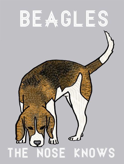 Curious Beagle Print Modern Dog Art. $12.00, via Etsy.