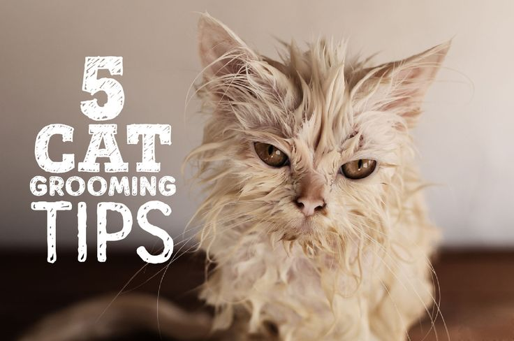 5 Cat Grooming Tips - You NEED These!