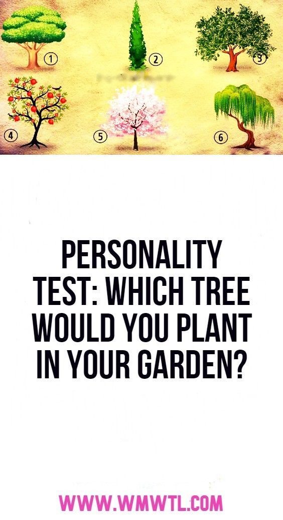 Personality Test Which Tree Would You Plant In Your Garden En 2020 Datos
