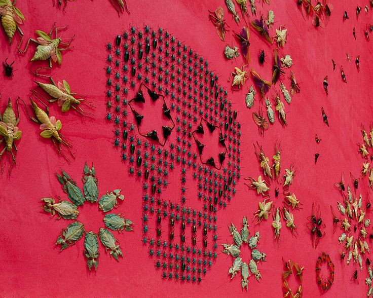 jennifer angus wallpapers renwick gallery with a pattern of 5,000 exotic bugs